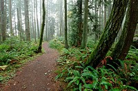 Trail in the Redmond Watershed, Seattle Metro Area, Washington, USA