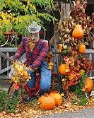 Scarecrow riding bicycle in yard decorated for autumn