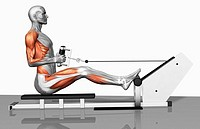 Cable row exercise Part 1 of 2