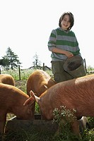 Boy 7_9 feeding pigs in sty