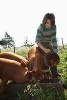 Boy 7-9 feeding pigs in sty (thumbnail)