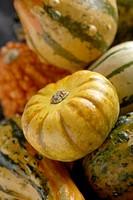 Squash pumpkins