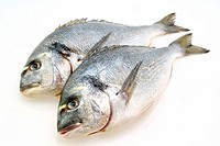 Fresh Bream