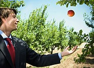Man catching falling apple in orchard