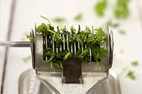 Parsley in a herb mill