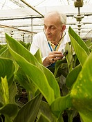Technician working in greenhouse