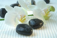 Stones and orchid blossoms