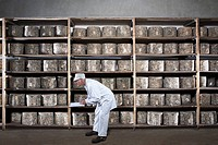 Man with clipboard leaning down by rack of cheeses