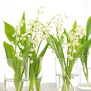 Lilies of the valley in glasses