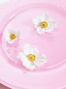 Primrose blossoms on a pink plate