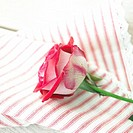 Red and white rose ond striped cloth