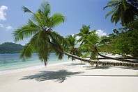 Palm trees over beach, Anse Takamaka, Mahe´, Seychelles