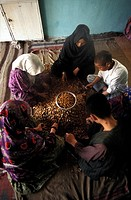 Kabul, family cracking nuts to supplement their income