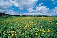 Italy - Tuscany Region - Mugello - Surroundings of Panna - Landscape