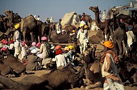 Rajasthan, a overview of the Pushkar camel fair