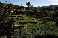 Nuwara Eliya, hill station, tea plantations