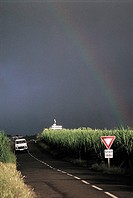 Reunion, rainbow above sugar cane fields