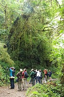 Costa Rica. Monteverde. Cloud Forest Preserve. Birdwatchers on the trail.