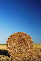 Cylinder Shaped Straw Bale