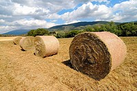 Straw rolls. Osseja, Pyrénées-Orientales, France