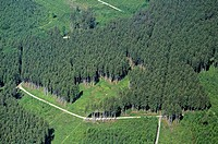 Air-picture-reception of a spruce-forest, Germany