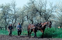 Farmer, plowing, with, horses, Hungary