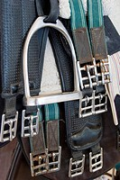 Horse Bridle and Tack at Al Reef Endurance Horse Race in the Desert, Abu Dhabi, UAE