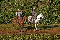 Pantanal Cowboy,Pantaneiro,Horse,Pantaneiro Horse,Pantanal,Brazil,riding
