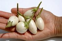 Hand holding white Thai aubergines