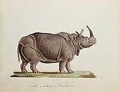 Oluf Braren 1787 - 1839, Künstler, Kunst, naive Malerei, Gemälde, Deutschland, 19  Jahrhundert, Das asiatische Nashorn, Nashörner, Tier, Tiere, Biolog...