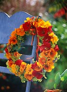 Wreath of nasturtiums, lady´s mantle and catmint