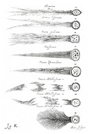 Types of comets  Artwork published in 1668 by the Polish astronomer Johannes Hevelius 1611-1687, showing different types of comets  Comets are bodies ...