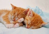 two kittens - sleeping