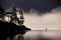 canoeist near island of white pine on misty Lake of Two Rivers at dawn, alqonquin provincial park, ontario, Canada
