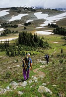 Men hiking the Musical Bumps trail from Whistler to Russet Lake, Garibaldi Provincial Park, British Columbia, Canada