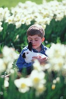 Boy plays with rabbit in field of daffodils, British Columbia, Canada