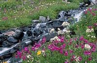 Alpine flowers and stream, Cariboo Mountains, British Columbia, Canada