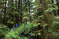 Family on rainforest trail at Pacific Rim National Park, Vancouver Island, British Columbia, Canada