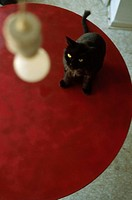 Black Cat on Red Table