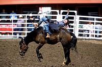 Bareback Bronc Riding, Calgary Stampede Rodeo, Alberta