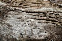 wooden texture, Angra dos Reis, Rio de Janeiro, Brazil