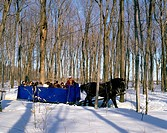 Sleigh Ride at Maple Sugar Farm in Winter