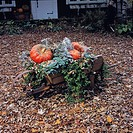 Wheelbarrow with Vines and Pumpkins