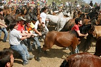 Rapa das Bestas. Galicia. Spain.