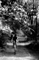 europa, italia, lombardia, parco del ticino, ramo in fiore