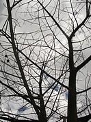 Tree, São Paulo, Brazil