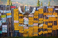 License Plates on a Fence, Boundary, Alaska (thumbnail)