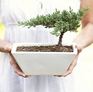 Woman holding bonsai tree in pot, mid section