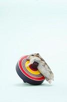 Dzhungarian hamster Phodopus sungorus climbing spinning top, studio shot