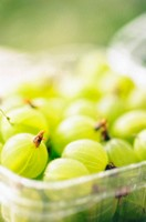 Green gooseberries in container, close-up